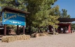 Queen Creek Arizona Schnepf Farms